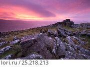 Купить «Spectacular pink sunrise above Belstone Tor, Dartmoor National Park, Devon, England. January 2012.», фото № 25218213, снято 19 июля 2018 г. (c) Nature Picture Library / Фотобанк Лори
