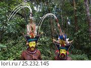 Купить «Huli Wigmen - Timan Tumbu and Hale Johu from Tari Southern Highlands, Papua New Guinea. Feathers in head dress include Superb Bird of Paradise breast shield...», фото № 25232145, снято 16 февраля 2019 г. (c) Nature Picture Library / Фотобанк Лори