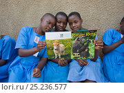 Купить «Students reading Ranger Rick, a children's nature magazine. Kasiisi School funded by the Kasiisi School Project, just outside of Kibale National Park, Uganda, August 2011», фото № 25236577, снято 26 сентября 2018 г. (c) Nature Picture Library / Фотобанк Лори