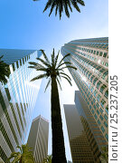 Купить «Looking up at palm trees and skycrapers in downtown Los Angeles, California, USA 2011», фото № 25237205, снято 22 августа 2018 г. (c) Nature Picture Library / Фотобанк Лори