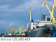Купить «Large vessels being repaired on the dockside in the industrial harbour of Klaipeda, Lithuania, August 2007.», фото № 25243453, снято 8 июля 2020 г. (c) Nature Picture Library / Фотобанк Лори