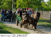 Купить «Tourism in the delta, horse wagon trip, Letea, Danube delta rewilding area, Romania May 2012», фото № 25244637, снято 27 мая 2018 г. (c) Nature Picture Library / Фотобанк Лори
