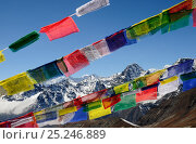 Prayer flags on Cho La Pass (5.420 m), Sagarmatha National Park (World Heritage UNESCO). Khumbu / Everest Region, Nepal, Himalaya, October 2011. Стоковое фото, фотограф Enrique Lopez-Tapia / Nature Picture Library / Фотобанк Лори