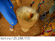 Купить «Women pounding grain in a mortar by hand, Bassari country, located east Senegal. This area became a UNESCO World Heritage site in 2012, for cultural landscape...», фото № 25248113, снято 18 марта 2018 г. (c) Nature Picture Library / Фотобанк Лори