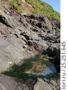 Rockpool high on a rocky shore fringed with Gutweed (Ulva intestinalis / Enteromorpha intestinalis), with grassy cliffs rising behind it, Wembury, Devon, UK, August. Стоковое фото, фотограф Nick Upton / Nature Picture Library / Фотобанк Лори