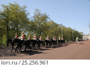 Купить «Horse Guards parading on The Mall, past avenue of London Plane Trees (Platanus x hispanica), with Buckingham Palace in the background, London, UK, May. 2012», фото № 25256961, снято 15 августа 2018 г. (c) Nature Picture Library / Фотобанк Лори
