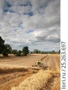 Купить «Combine harvester combining Oats, Haregill Lodge Farm, Ellingstring, North Yorkshire, England, UK, August.», фото № 25263697, снято 16 декабря 2017 г. (c) Nature Picture Library / Фотобанк Лори