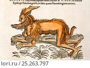 Woodcut illustration of mythical creature with contemporary colouring from 'Icones Animalium' Publ. Christof Froschover, Zurich, 1560. Gesner illustrates... Стоковое фото, фотограф Paul D Stewart / Nature Picture Library / Фотобанк Лори