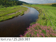 Купить «Landscape view of the River Whiteadder, a tributary of the River Tweed, with two scientists walking along the bank carrying electro fishing equipment to...», фото № 25269981, снято 23 мая 2018 г. (c) Nature Picture Library / Фотобанк Лори