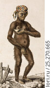 Illustration of female Orangutan (Pongo pygmaeus). 1795 'A Domesticated Female Orang Outang' (sic). Frid Gmelin and Carl Linnaeus (posthumous). 'A Genuine... Стоковое фото, фотограф Paul D Stewart / Nature Picture Library / Фотобанк Лори