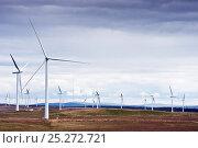 Купить «Wind turbines on Whitelee Windfarm, Glasgow, Scotland, August 2011.», фото № 25272721, снято 21 сентября 2019 г. (c) Nature Picture Library / Фотобанк Лори