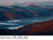 Купить «Carpathian beech forest above a misty valley. Bieszczady National Park, the Carpathians, Poland, January.», фото № 25292321, снято 19 июля 2018 г. (c) Nature Picture Library / Фотобанк Лори