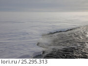 Купить «Blizzard on the fast ice edge near Mawson Station, Antarctica, March 2011.», фото № 25295313, снято 22 сентября 2018 г. (c) Nature Picture Library / Фотобанк Лори
