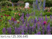 Купить «Cottage garden in summer with flowering roses, lupins and paeonies, Norfolk, UK, June», фото № 25306645, снято 18 октября 2019 г. (c) Nature Picture Library / Фотобанк Лори