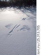 Купить «Snow angel, print in snow of landing of Steller's sea eagle (Haliaeetus pelagicus) Kamchatka, Far East Russia, January», фото № 25313705, снято 18 октября 2019 г. (c) Nature Picture Library / Фотобанк Лори