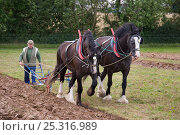 Купить «Farmer ploughing with a pair of Heavy shire horses, UK, July 2008», фото № 25316989, снято 16 августа 2018 г. (c) Nature Picture Library / Фотобанк Лори