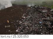 Купить «Land fill, highlands of Santa Cruz Island, Galapagos Islands, May 2008», фото № 25320053, снято 19 ноября 2019 г. (c) Nature Picture Library / Фотобанк Лори