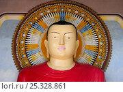 Купить «Head of statue at Buddhist monastery of Kelaniya Raja Maha Vihara, Sri Lanka. June 2010.», фото № 25328861, снято 20 августа 2018 г. (c) Nature Picture Library / Фотобанк Лори
