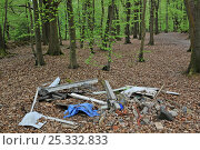 Купить «Illegal fly-tipping in Beech (Fagus) woodland in spring. Surrey, England, UK», фото № 25332833, снято 23 июля 2018 г. (c) Nature Picture Library / Фотобанк Лори