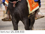 Купить «Domestic horse, close-up of naked feet in stirrups of a traditionally dressed Nihang (an armed Sikh soldier) mounted on his horse, during the Maghi Mela festival, Mukstar, Punjab, India. Janaury 2010», фото № 25334933, снято 13 декабря 2017 г. (c) Nature Picture Library / Фотобанк Лори