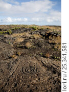 Купить «Pu' uloa Petroglyphs along the Chain of Craters Road in Hawai'i Volcanoes National Park, Big Island of Hawaii, USA, December 2008», фото № 25341581, снято 22 мая 2018 г. (c) Nature Picture Library / Фотобанк Лори