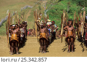 Купить «Rows of Yali hunters in traditional dress, gathered for an independance demonstration of Yali tribes. West Papua, former Irian-Jaya, Indonesia, August 2002 (West Papua).», фото № 25342857, снято 27 мая 2019 г. (c) Nature Picture Library / Фотобанк Лори