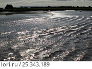 Купить «Severn bore lit up by strong sunlight. Severn Estuary. England, August 2009», фото № 25343189, снято 15 августа 2018 г. (c) Nature Picture Library / Фотобанк Лори