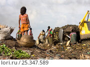 Купить «Adults and children searching for recyclable objects in landfill site, Dhaka, Bangladesh, November 2008», фото № 25347589, снято 19 июня 2018 г. (c) Nature Picture Library / Фотобанк Лори