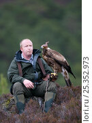 Falconer with Golden eagle (Aquila chrysaetos), Scotland, UK, March, model released. Стоковое фото, фотограф Pete Cairns / Nature Picture Library / Фотобанк Лори
