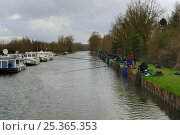Купить «Coarse fishermen at Vaux on the Somme River, Northern France, March 2009», фото № 25365353, снято 22 июля 2018 г. (c) Nature Picture Library / Фотобанк Лори