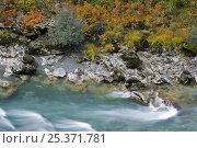 Купить «River Tara with autumnal vegetation on bank, Durmitor NP, Montenegro, October 2008», фото № 25371781, снято 19 августа 2018 г. (c) Nature Picture Library / Фотобанк Лори