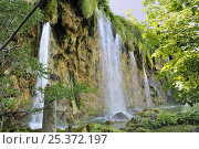 Купить «Waterfalls in Plitvice Lakes National Park, Croatia, where travertine forms as moss becomes coated in lime.», фото № 25372197, снято 21 сентября 2018 г. (c) Nature Picture Library / Фотобанк Лори