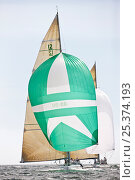 Купить «Yachts racing under spinnaker at the 12 Metre World Championships, Newport, Rhode Island, USA. September 2009.», фото № 25374193, снято 16 июля 2018 г. (c) Nature Picture Library / Фотобанк Лори