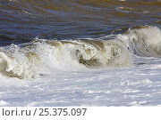 Купить «Wave breaking on seashore at high tide, Liverpool Bay, UK, October 2008», фото № 25375097, снято 14 мая 2018 г. (c) Nature Picture Library / Фотобанк Лори