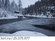 Купить «Whirlpool with ice in water, small hut on bank, Kitkajoki River, Oulanka National Park, Finland, February 2009», фото № 25375977, снято 21 июля 2018 г. (c) Nature Picture Library / Фотобанк Лори