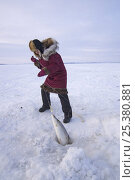 Купить «Young Inupiaq woman pulling Sheefish (Stenodus leucichthys nelma) out of a hole in pack ice over the Chukchi Sea, for the village elders of Kotzebue, Alaska, March 2008», фото № 25380881, снято 16 июля 2018 г. (c) Nature Picture Library / Фотобанк Лори
