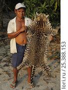 Купить «Local hunter with Ocelot skin {Leopardus / Felis pardalis} poached in the forest, Amazonas, Brazil, September 2007», фото № 25388153, снято 22 июля 2019 г. (c) Nature Picture Library / Фотобанк Лори