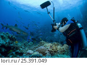 Juergen Freund photographing sharks and fish underwater, Tonga, Melanesia, 2007. Стоковое фото, фотограф Jurgen Freund / Nature Picture Library / Фотобанк Лори
