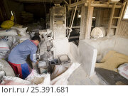 Купить «Milling / husking the harvested threshed rice. The husk is striped from the rice by passing the rice through two spinning rubber roles, one roll spinning...», фото № 25391681, снято 20 января 2018 г. (c) Nature Picture Library / Фотобанк Лори