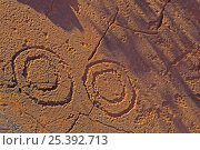 Купить «Concentric circles at Ewaninga Rock Carvings Conservation Reserve, South of Alice Springs, Northern Territory, Australia», фото № 25392713, снято 16 декабря 2017 г. (c) Nature Picture Library / Фотобанк Лори