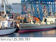 Купить «Ships at port, Valparaiso, Chile 2008.», фото № 25395781, снято 16 октября 2019 г. (c) Nature Picture Library / Фотобанк Лори