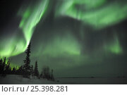 Купить «Northern lights (Aurora borealis) Northwest territories, March 2008, Canada», фото № 25398281, снято 3 февраля 2020 г. (c) Nature Picture Library / Фотобанк Лори