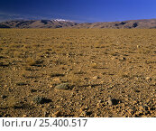 Todra Valley, The Altiplano, High Atlas mountains, Morocco. Стоковое фото, фотограф Oriol Alamany / Nature Picture Library / Фотобанк Лори