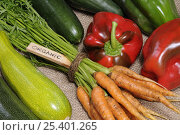 Купить «Freshly harvested home grown organic vegetables with 'organic' label, carrots, peppers, courgettes, cucumbers, UK», фото № 25401265, снято 17 марта 2018 г. (c) Nature Picture Library / Фотобанк Лори