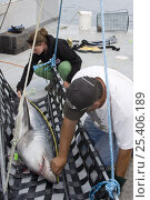 Купить «Emmerson Simpson, of Sharks Unlimited, and Pamela Emery, of the Canadian Shark Conservation Society, measure a Porbeagle shark (Lamna nasus) which will...», фото № 25406189, снято 17 марта 2018 г. (c) Nature Picture Library / Фотобанк Лори