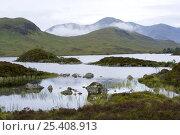 Купить «Upland pools on Rannoch Moor, near Glencoe, Highland, Scotland, UK», фото № 25408913, снято 17 августа 2018 г. (c) Nature Picture Library / Фотобанк Лори