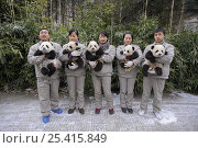 Купить «Keeper's team holding giant panda babies (Ailuropoda melanoleuca) aged 5 months at Wolong Nature Reserve, China, 2008, Captive», фото № 25415849, снято 14 октября 2019 г. (c) Nature Picture Library / Фотобанк Лори
