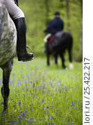Купить «Leg and boot detail of Horserider trekking through bluebell wood, Brecon Beacons National Park, Powys, Wales, UK, Model released», фото № 25422217, снято 24 февраля 2018 г. (c) Nature Picture Library / Фотобанк Лори