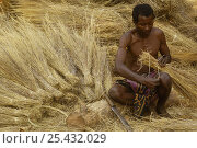 Купить «Sakalva man preparing thatch grass, wearing an amulet or 'ody fitahantena' to protect him from bad spirits. Ankarafantsika Nature Reserve, MADAGASCAR 2005», фото № 25432029, снято 17 марта 2018 г. (c) Nature Picture Library / Фотобанк Лори