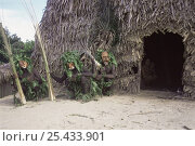 Купить «Group of Matis hunters dressed up in masks, foliage and darkened skin, whilst women and children remain in hut, Amazonia, Brazil», фото № 25433901, снято 22 сентября 2018 г. (c) Nature Picture Library / Фотобанк Лори